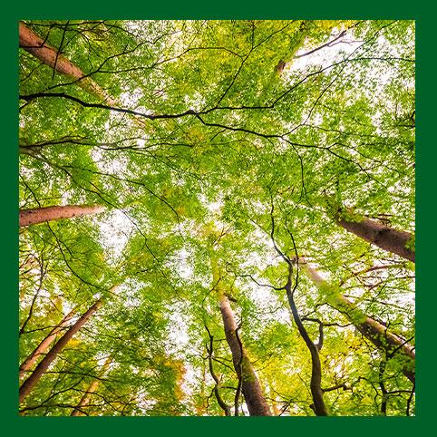 Nature & environnement